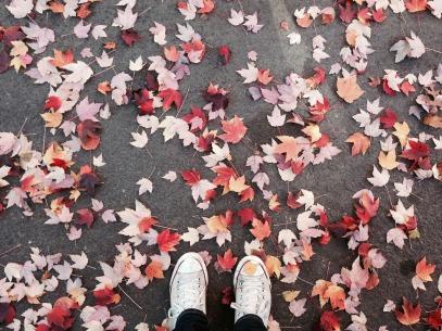 fall-2257526_1920