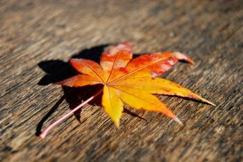 leaf-2611255_1920
