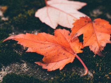 leaves-1030816_1920