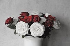 roses-3130315_1920