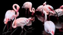pink-flamingo-3206415_1920