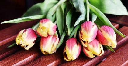 tulips-3223283_1280